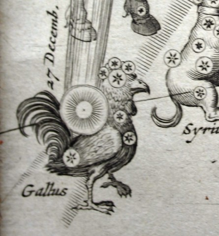 Gallus - Petrus Plancius