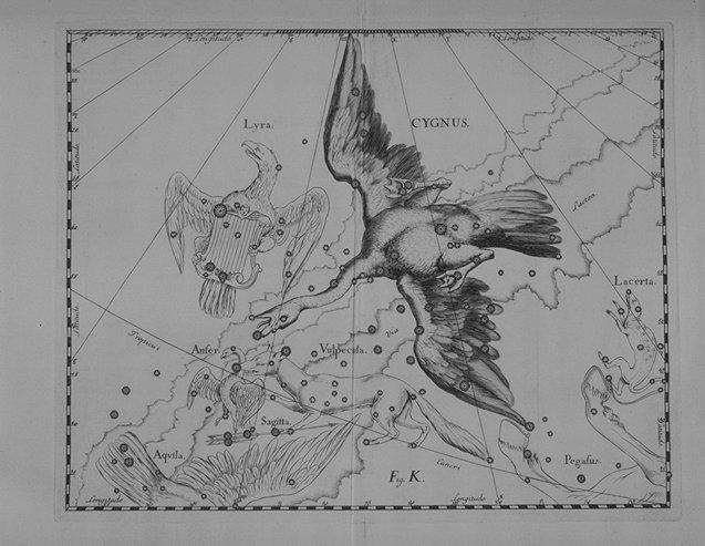 Cygnus - Hevelius